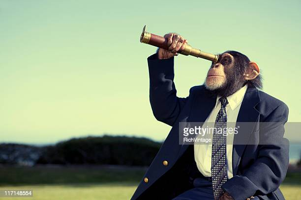 business vision - funny monkeys stock photos and pictures