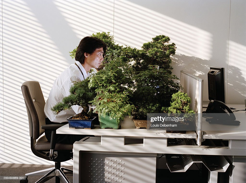 Businessman At Desk With Large Group Of Bonsai Trees High Res Stock Photo Getty Images