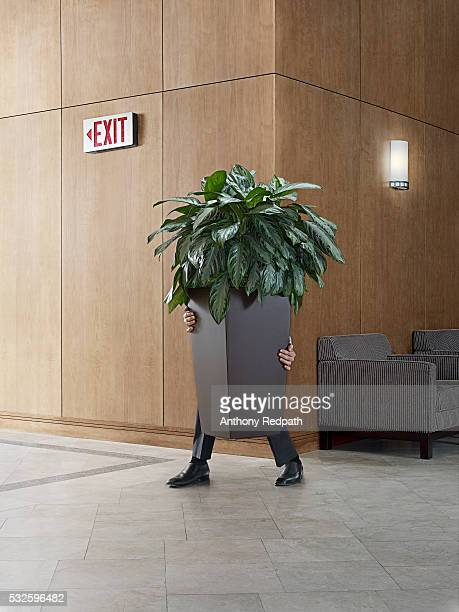businessman carrying a potted plant - falsenews stock pictures, royalty-free photos & images