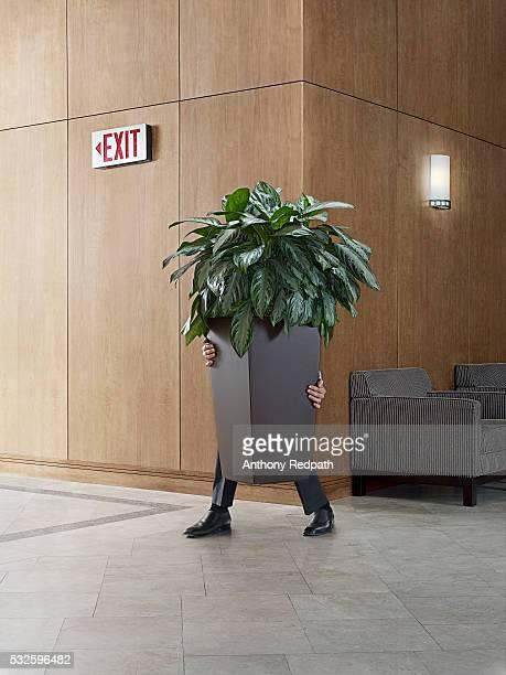 businessman carrying a potted plant - esconder imagens e fotografias de stock