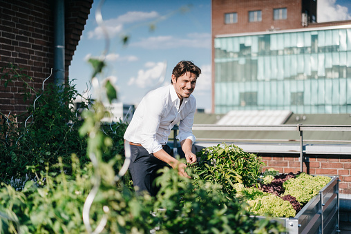 Businessman cultivating plants in his urban rooftop garden - gettyimageskorea