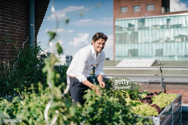 businessman cultivating plants in his urban rooftop garden - freizeitaktivität stock-fotos und bilder