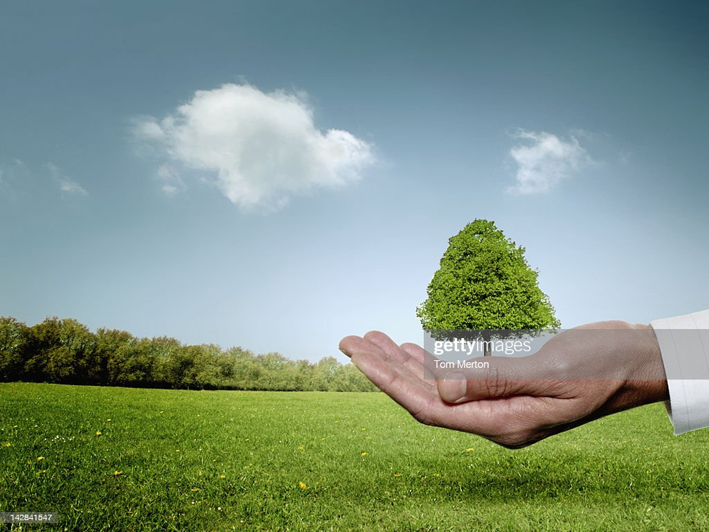 Businessman cupping hand around tree : Stock Photo