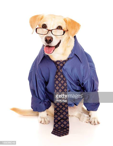 Homme d'affaires de chien