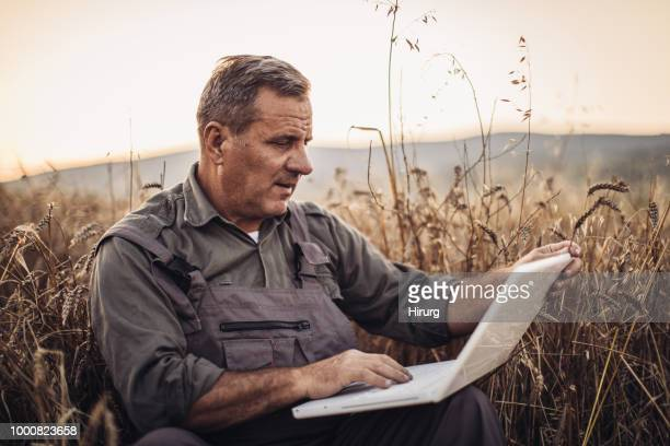 businessman farmer is on a field of ripe wheat and holds a laptop in his hands. - producer stock pictures, royalty-free photos & images