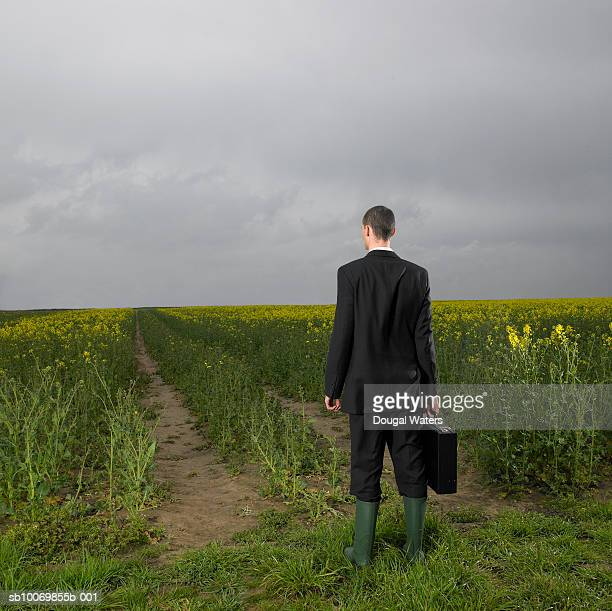 Businessman holding briefcase, standing in field, rear view