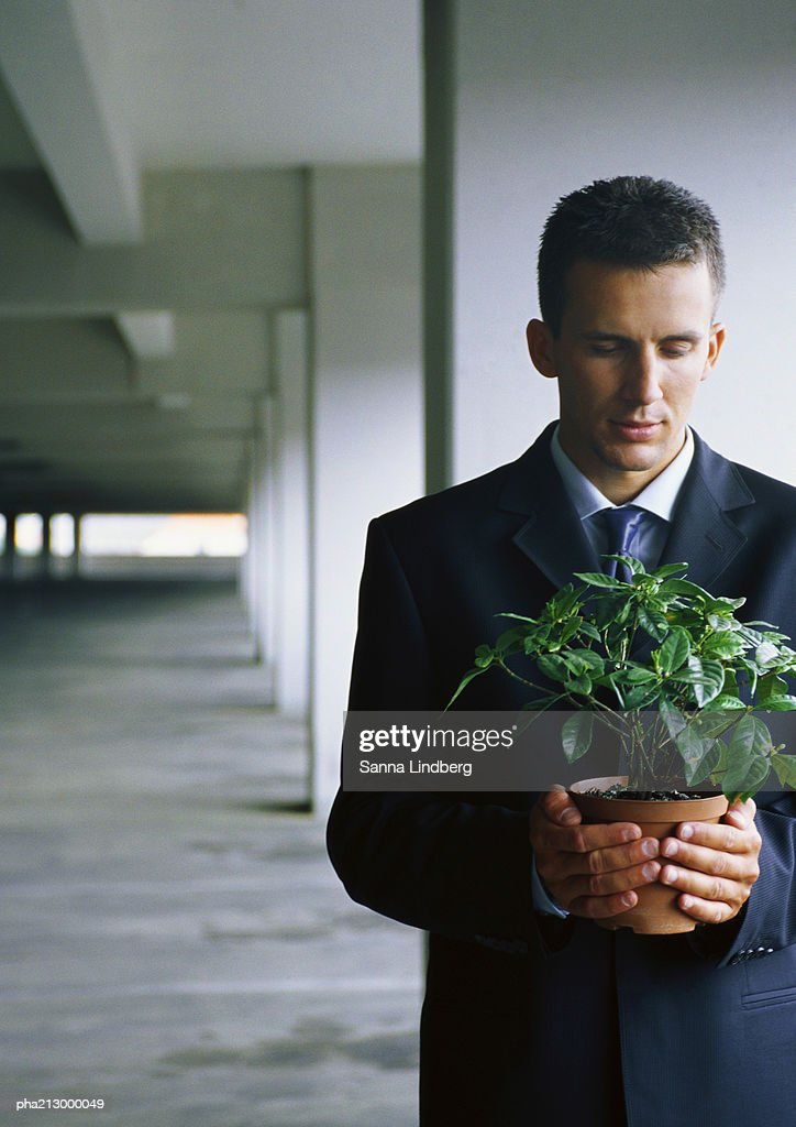 Businessman holding  potted plant in both hands : Stockfoto