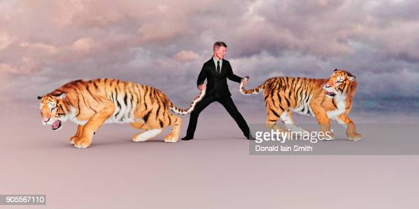 businessman holding tigers by the tails - control stock pictures, royalty-free photos & images