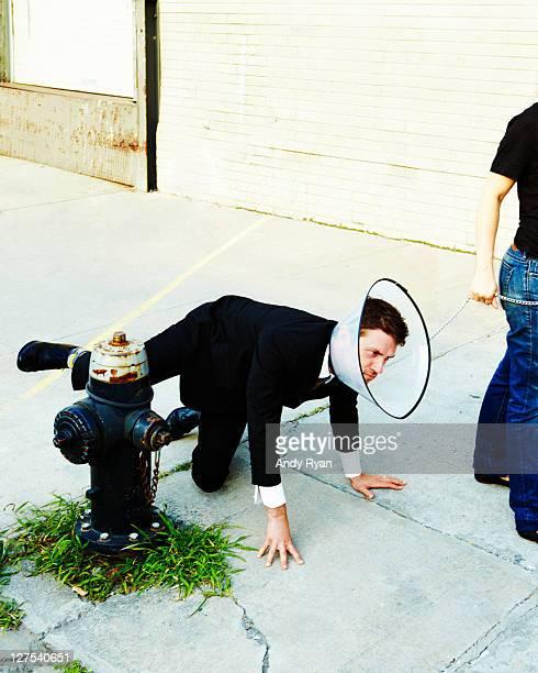 Businessman in dog collar peeing on hydrant.