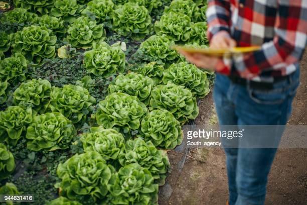 Businessman in greenhouse