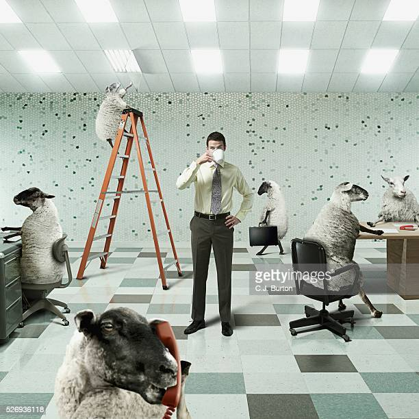 Businessman in Office with Sheep Co-workers