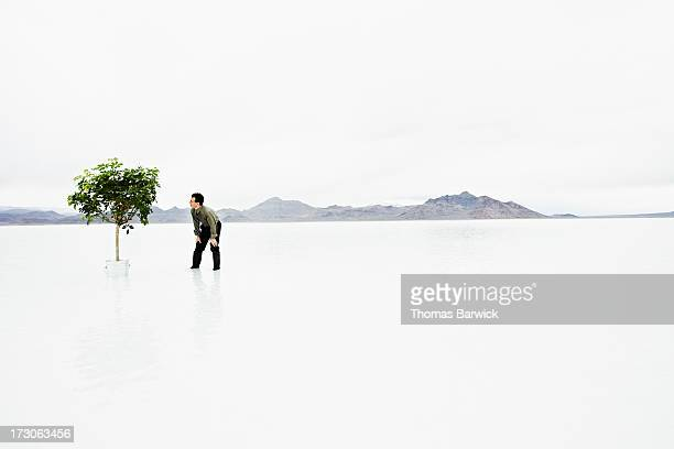 Businessman in water looking at potted tree