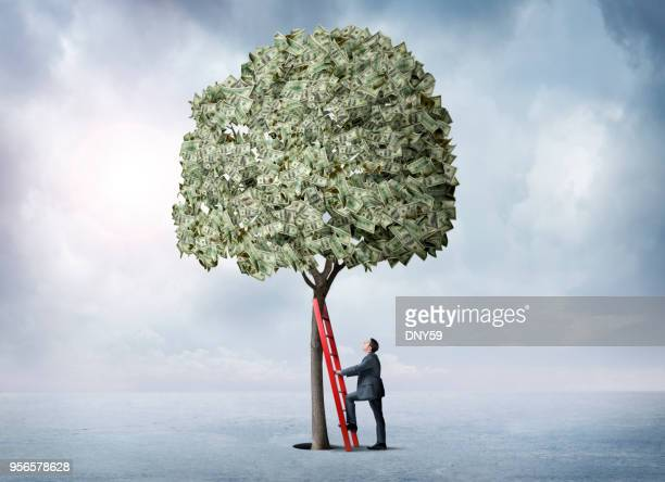 businessman leans a ladder against a money tree - money tree stock photos and pictures