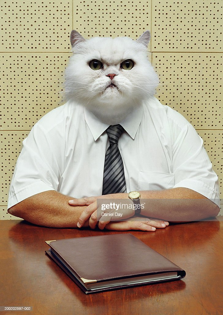 businessman metamorphasised as cat ストックフォト getty images