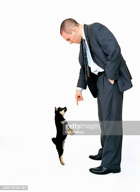 businessman pointing finger at shiba inu dog, side view - homme soumis photos et images de collection