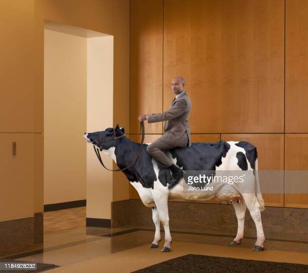 businessman riding cow in office - bearbeitungstechnik stock-fotos und bilder