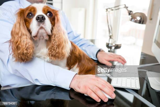 Businessman sitting at desk working with dog on his lap