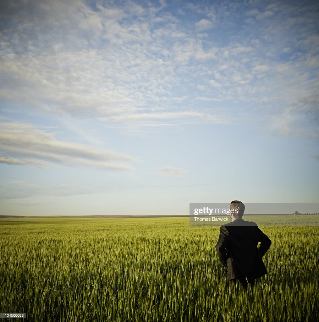 Businessman standing in wheat field hands on hips : ストックフォト