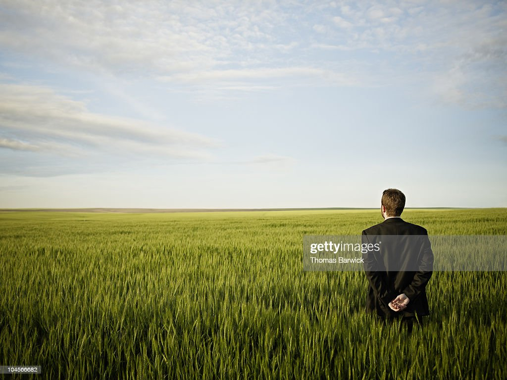Businessman standing in wheat field looking out : Stock Photo