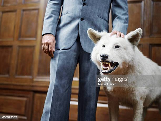 Businessman Standing with Snarling Wolf