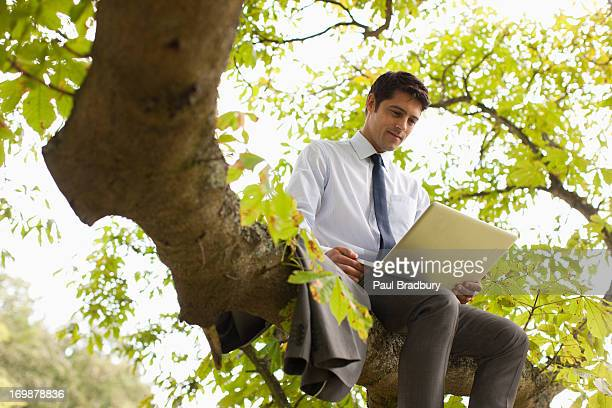 businessman using laptop on tree branch - out of context stock pictures, royalty-free photos & images
