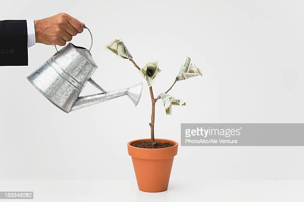 businessman watering potted money tree, cropped - making money stock pictures, royalty-free photos & images