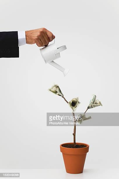 Businessman watering potted tree with hundred dollar bills growing on it