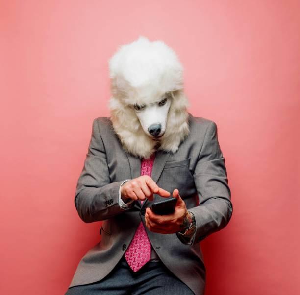 Businessman wearing Poodle dog mask using smartphone