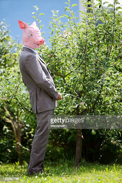 Businessman with pig's head urinating on tree