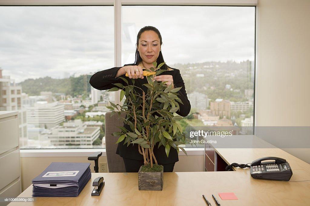 Businesswoman at desk trimming pot plant : Foto stock