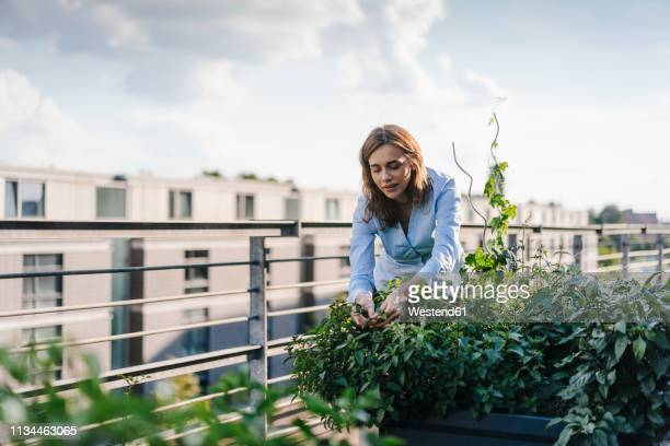 businesswoman cultivating vegetables in his urban rooftop garden - lebensstil stock-fotos und bilder