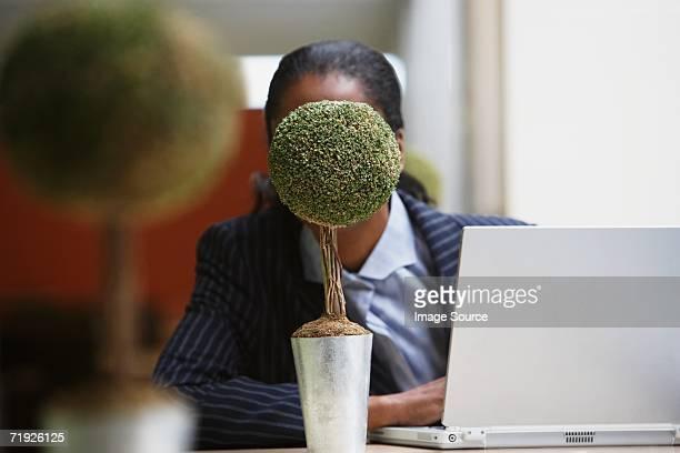 Businesswoman hiding behind bonsai tree