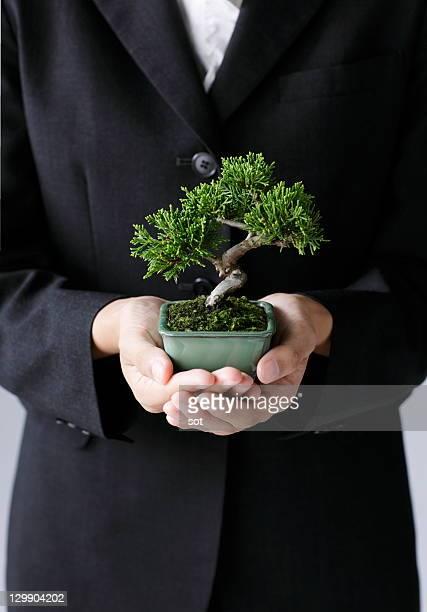 Businesswoman holding bonsai tree,close up