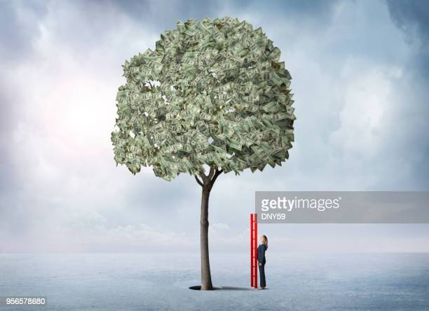 businesswoman holding ladder looks up at money tree - money tree stock photos and pictures