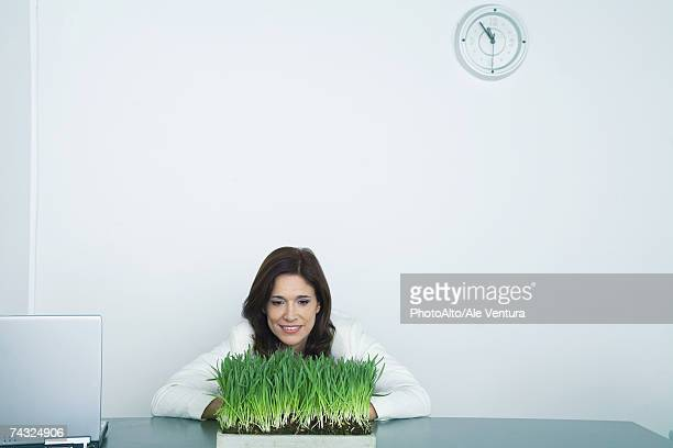 Businesswoman looking at tray of wheat grass