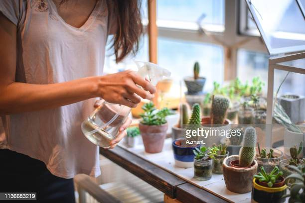 businesswoman watering succulent plants in shop - houseplant stock pictures, royalty-free photos & images