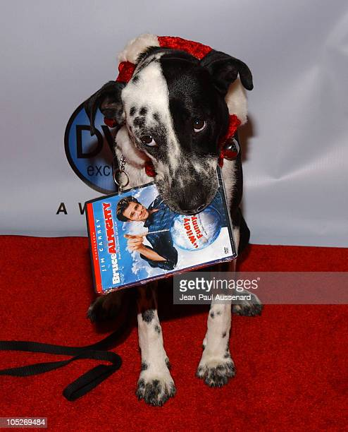 Buster from Bruce Almighty during The 3rd Annual DVD Exclusive Awards at The Wiltern Theater LG in Los Angeles California United States