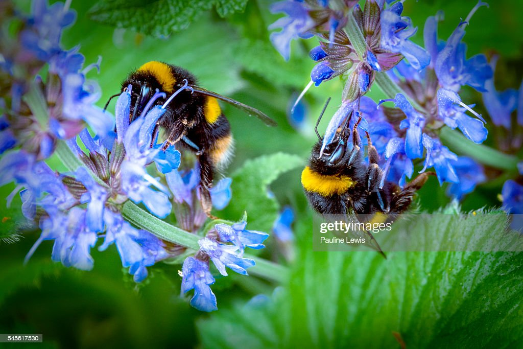 Busy Bees : Foto de stock
