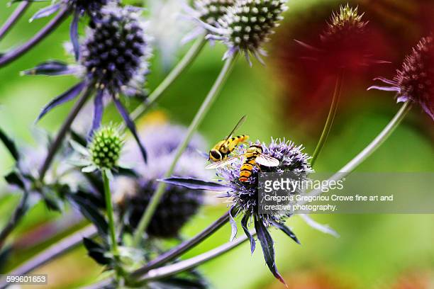 busy bees - gregoria gregoriou crowe fine art and creative photography. stock pictures, royalty-free photos & images