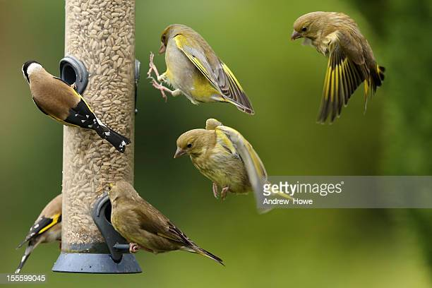 busy bird feeder - bird stock photos and pictures