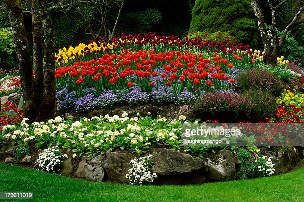 Butchart Garden Tulip Flower Landscaping Victoria