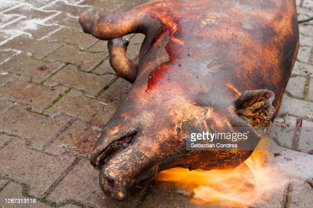 butcher handles a slaughtered pig - pigs trough stock pictures, royalty-free photos & images
