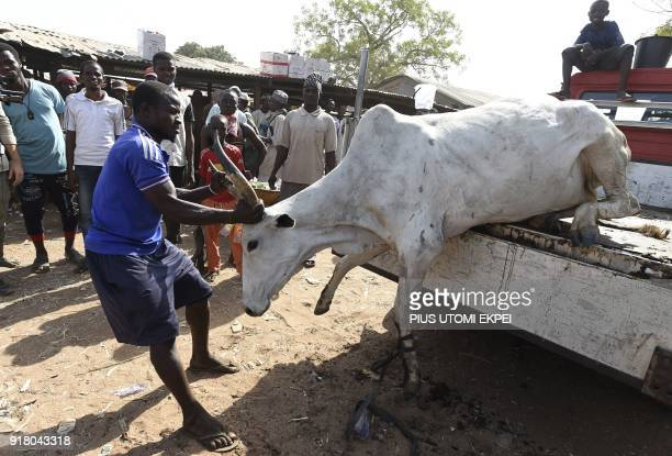 A butcher tries to discharge a cattle from a truck at a cattle market in Lafia capital of Nasarawa State northcentral Nigeria on January 4 2018...