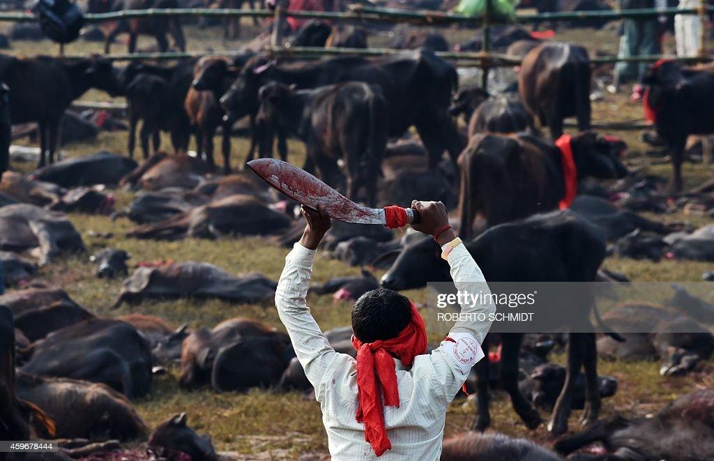 buff head kukri used in gadhimai festival