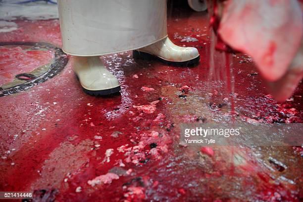 butchering pigs in slaughterhouse - 食肉処理場 ストックフォトと画像