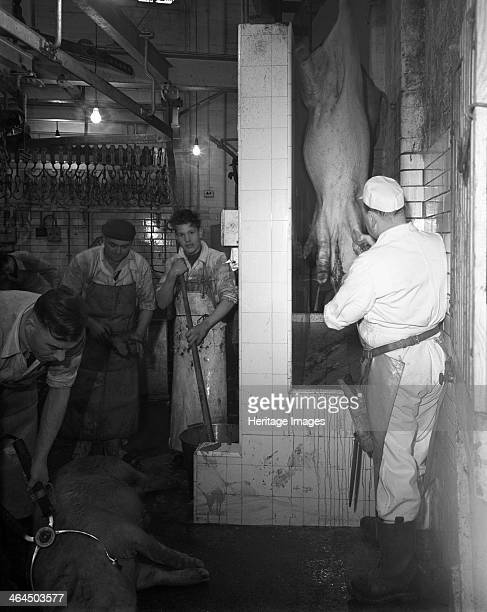 Butchery factory Rawmarsh South Yorkshire 1955 Scene inside Schonhut's butchery factory in the village of Rawmarsh near Rotherham showing the killing...