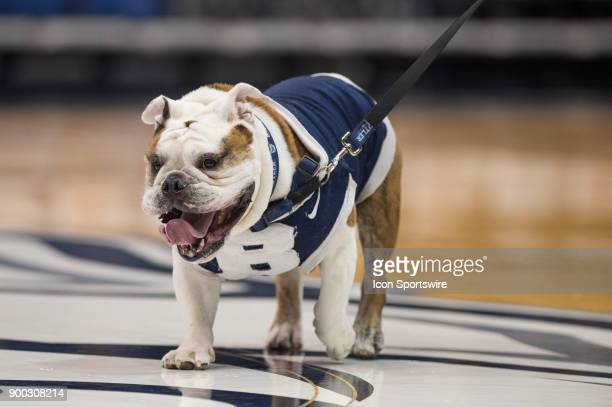 Butler Bulldogs mascot Trip on the court before the men's college basketball game between the Butler Bulldogs and Villanova Wildcats on December 30...