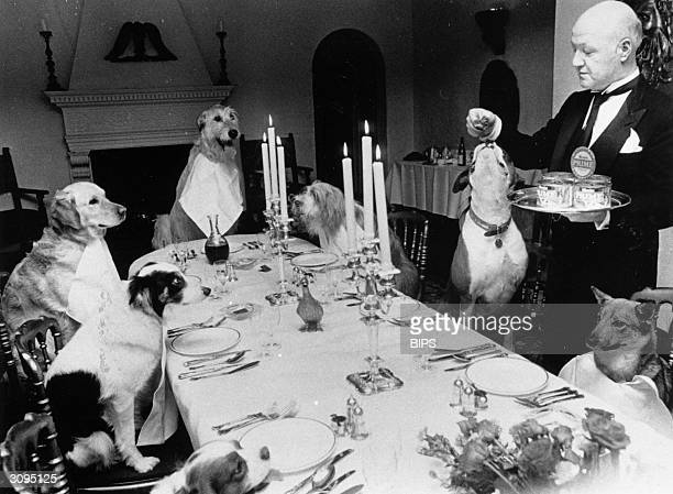 A butler serves a meal to a table of dogs in a Knightsbridge restaurant to mark the launch of a new dog food