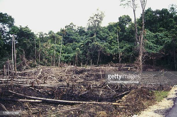 Buton Island deforestation of tropical rainforest to make room for incoming migrants from overcrowded parts of Indonesia