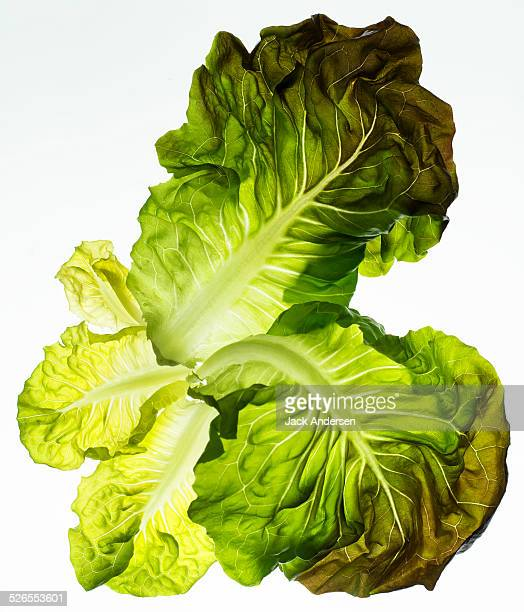 butter leaf on white - lettuce stock pictures, royalty-free photos & images